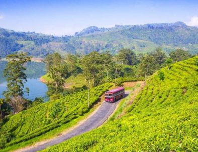 Wunderschöne Sri Lanka- Reise